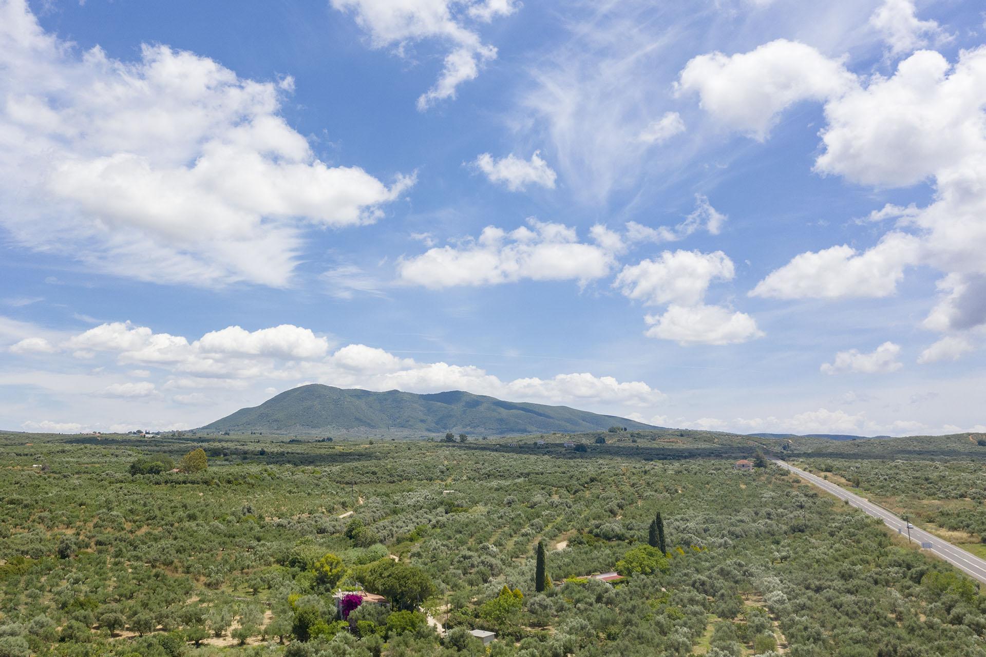 Tsaglis Extra Virgin Olive Oil – Kalamata Messinia – Southwest Peloponnese
